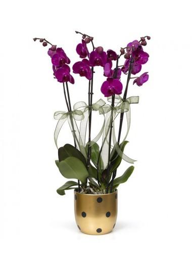 Puantiyeli vazoda 4 dal mor orkide