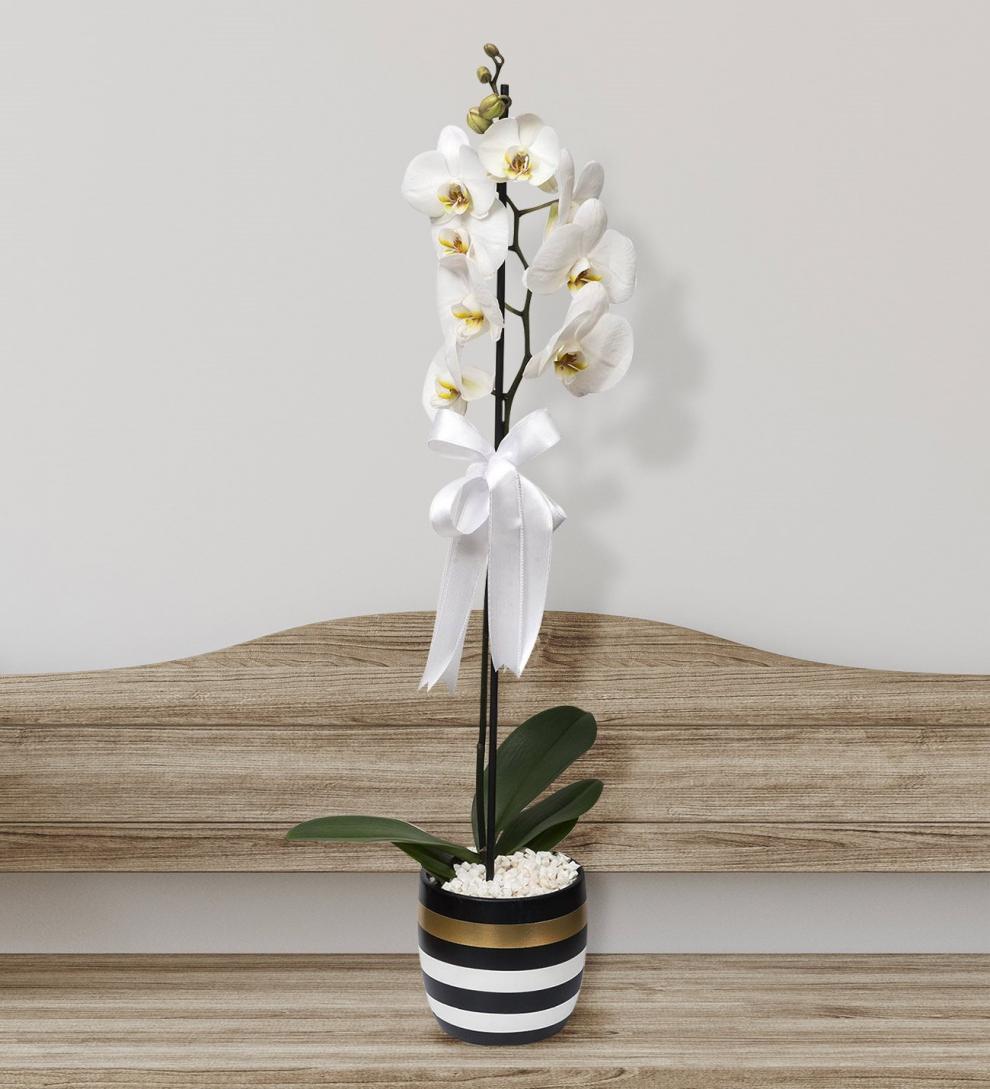 Çizgili vazoda beyaz tek dal orkide