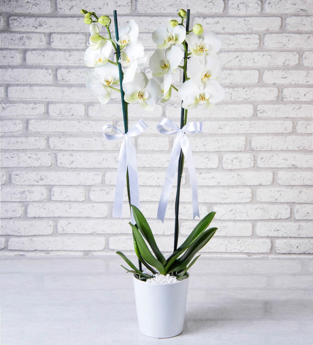 Seramikte Çift Dallı Beyaz Orkide