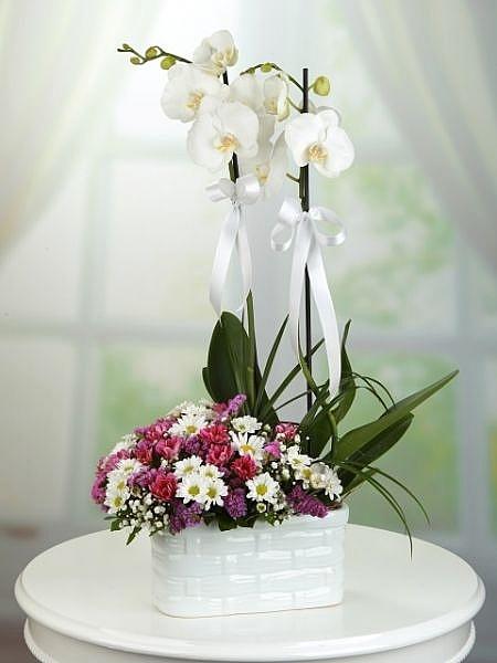 Seramikte Beyaz Orkide ve Rengarenk Papatyalar
