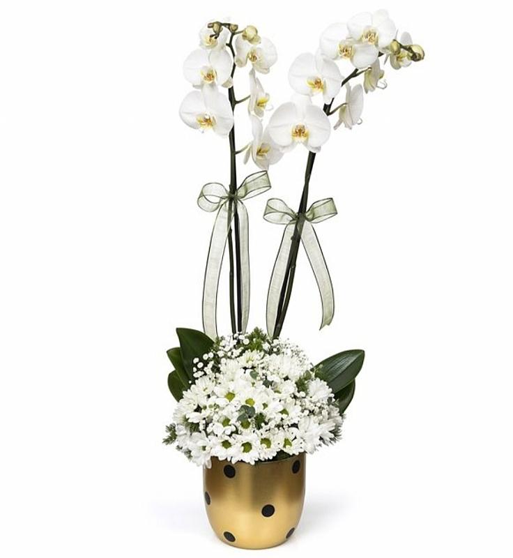 Gold vazoda 2 dallı orkide ve papatya aranjmanı