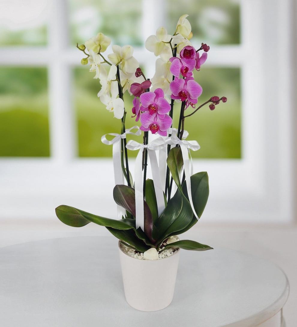 4 dal orkide beyz ve mor