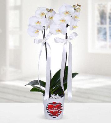 Seni seviyorum vazoda çift dal beyaz orkide