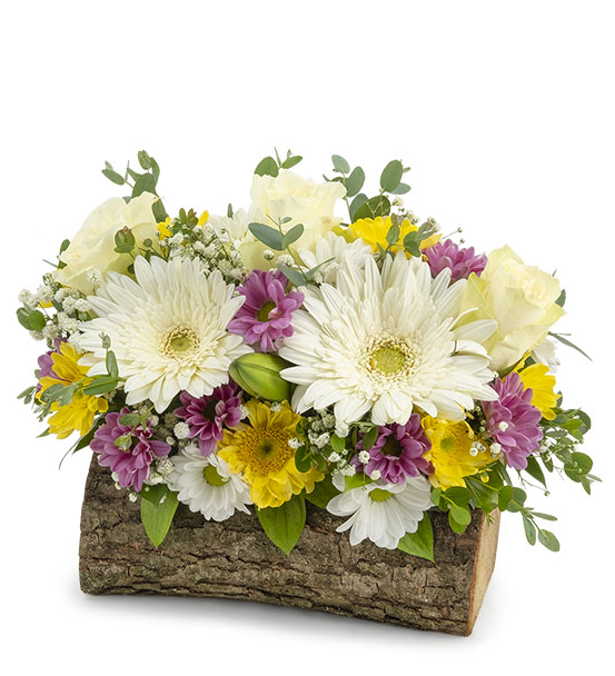 Doğal kütükte renkli çiçekler