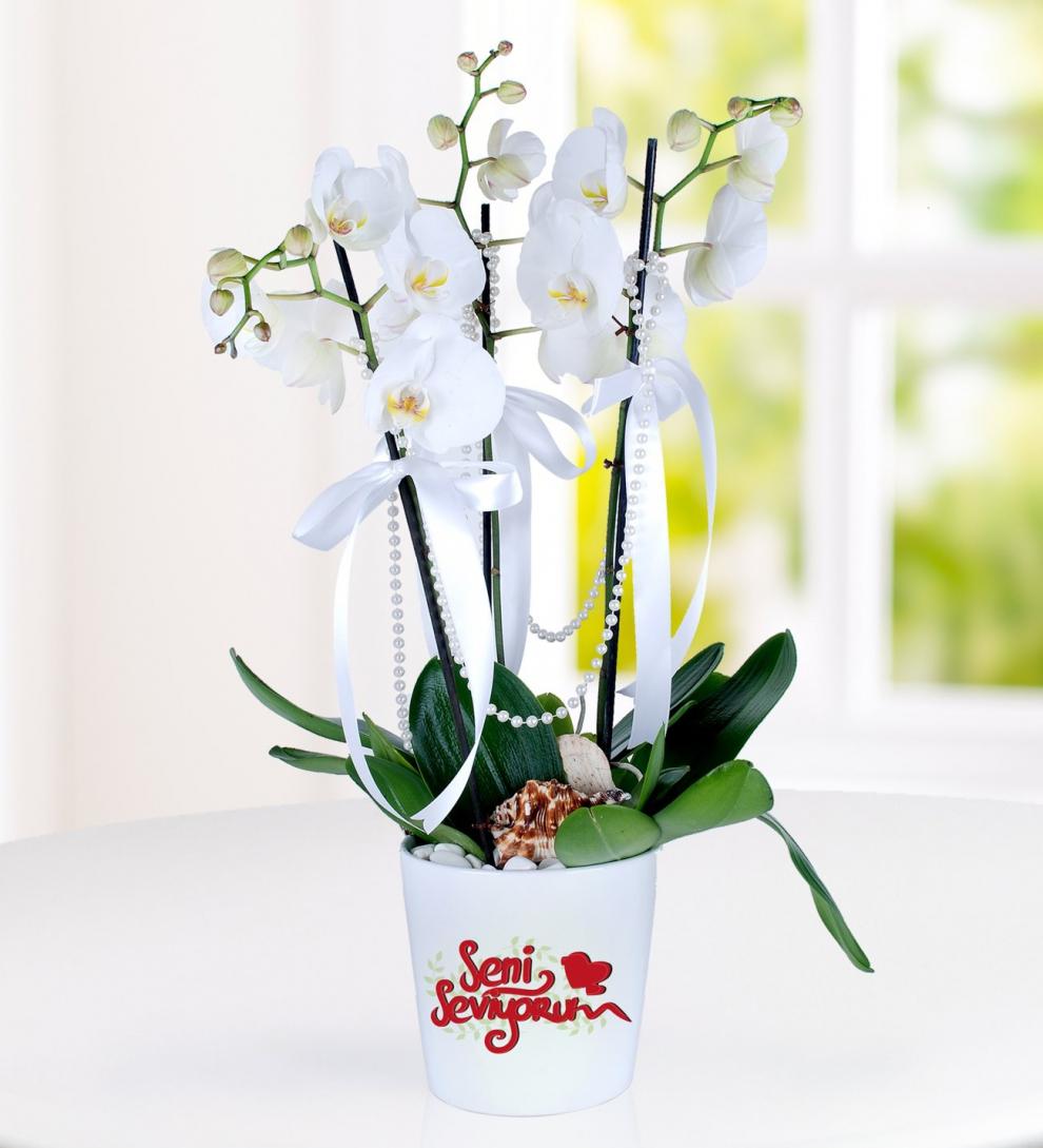 3 dal seni seviyorum temalı orkide